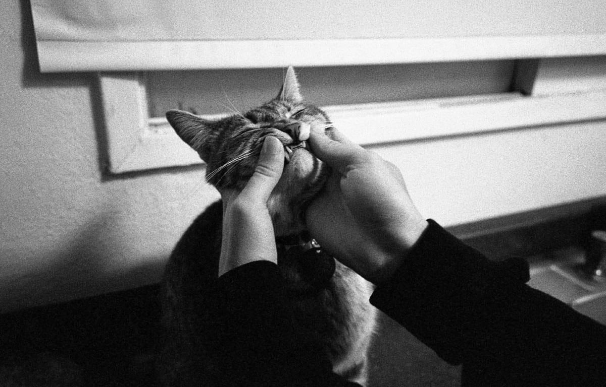 Devin Briggs, Cat, Photography