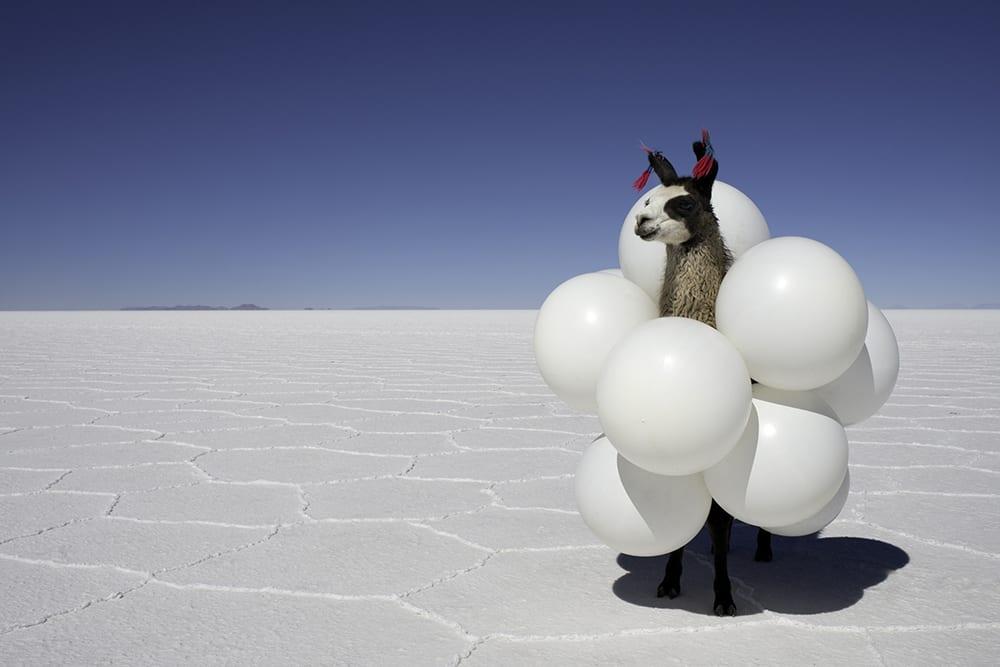 Gray Malin, Llama White Balloons from Far Far Away series, 2013, print on archival luster paper ©Gray Malin 2013
