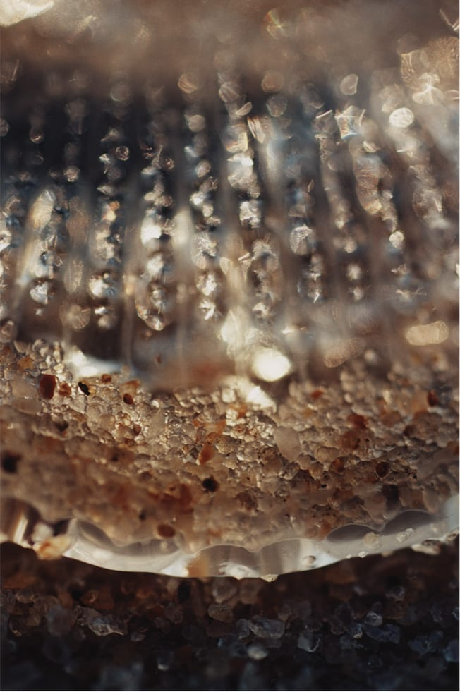 "Alyson Denny, Jellyfish Picture No. 2, color photograph, 40 x 30"", 2001"
