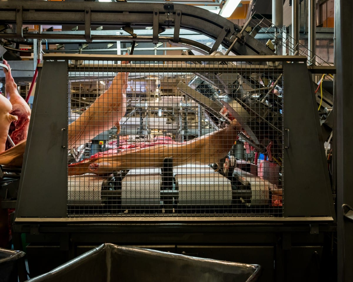 Alastair Philip Wiper, Danish Crown Slaughterhouse, Photograph, November 2013