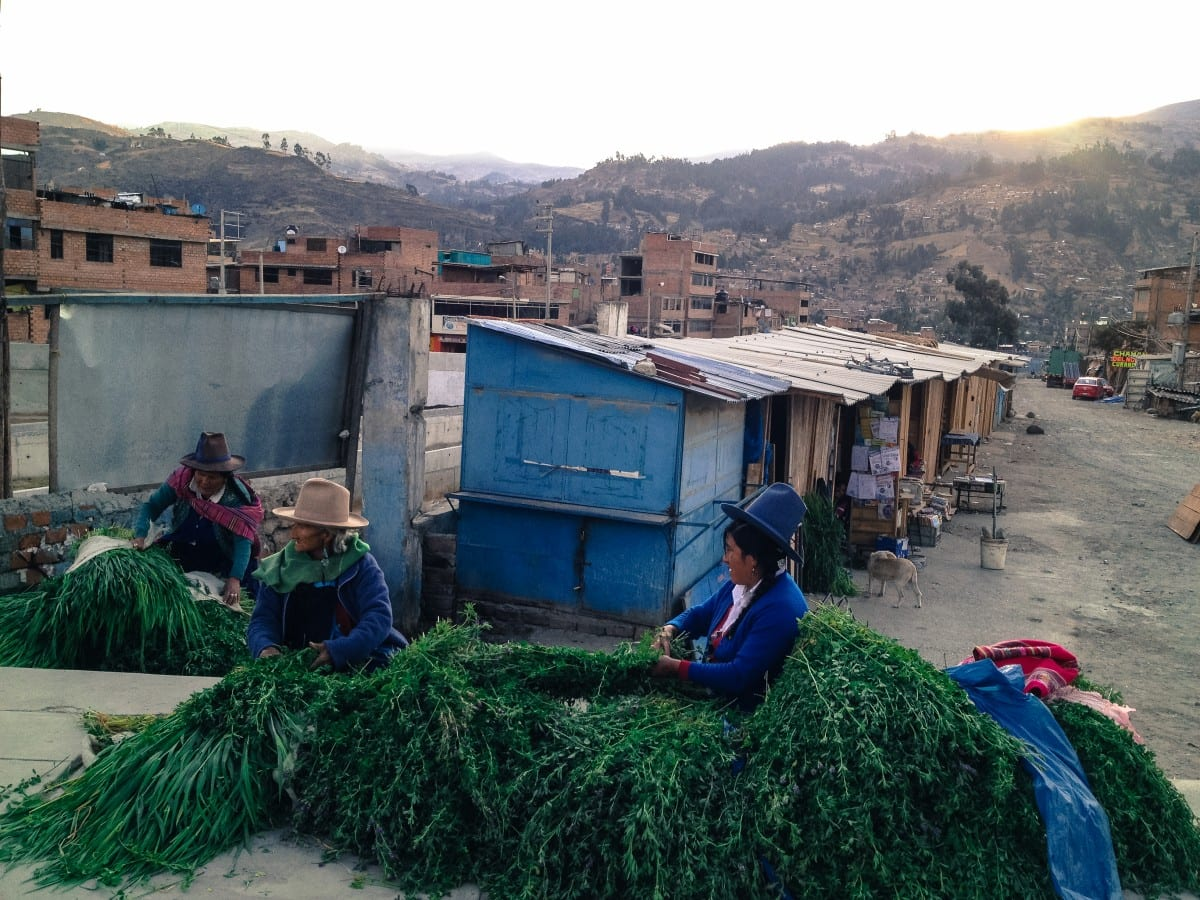 Andes women along a street in Huaraz sorting bunches of flowers and herbs gathered in the mountains and sold for teas or medicine. Photo by Jared Aufrichtig